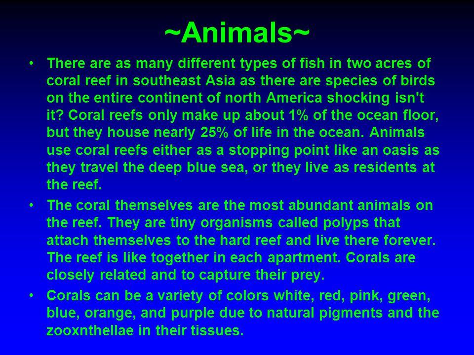 ~Animals~