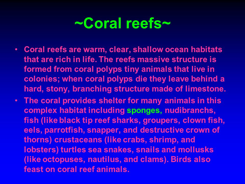 ~Coral reefs~