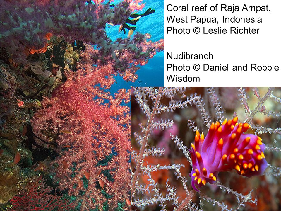 Coral reef of Raja Ampat, West Papua, Indonesia Photo © Leslie Richter