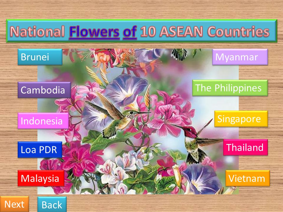 National Flowers of 10 ASEAN Countries