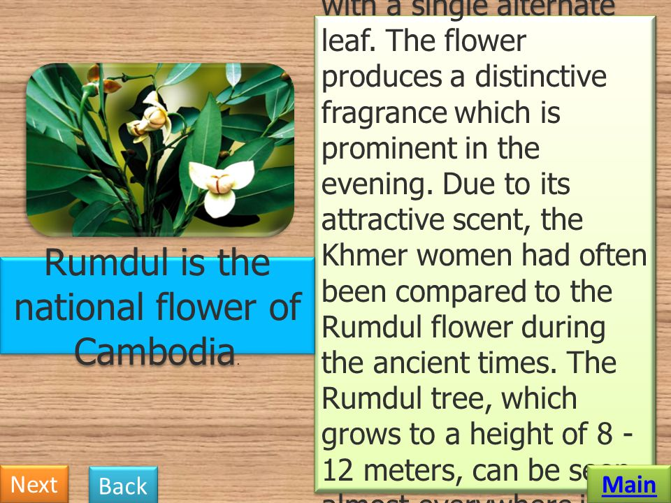 Rumdul is the national flower of Cambodia.