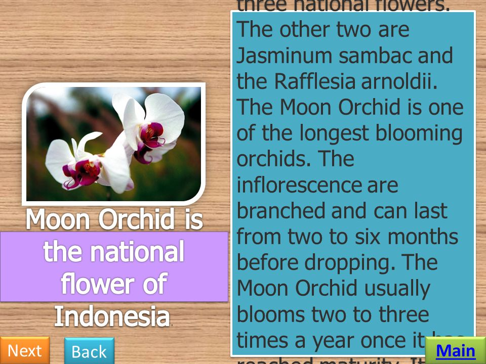 Moon Orchid is the national flower of Indonesia.