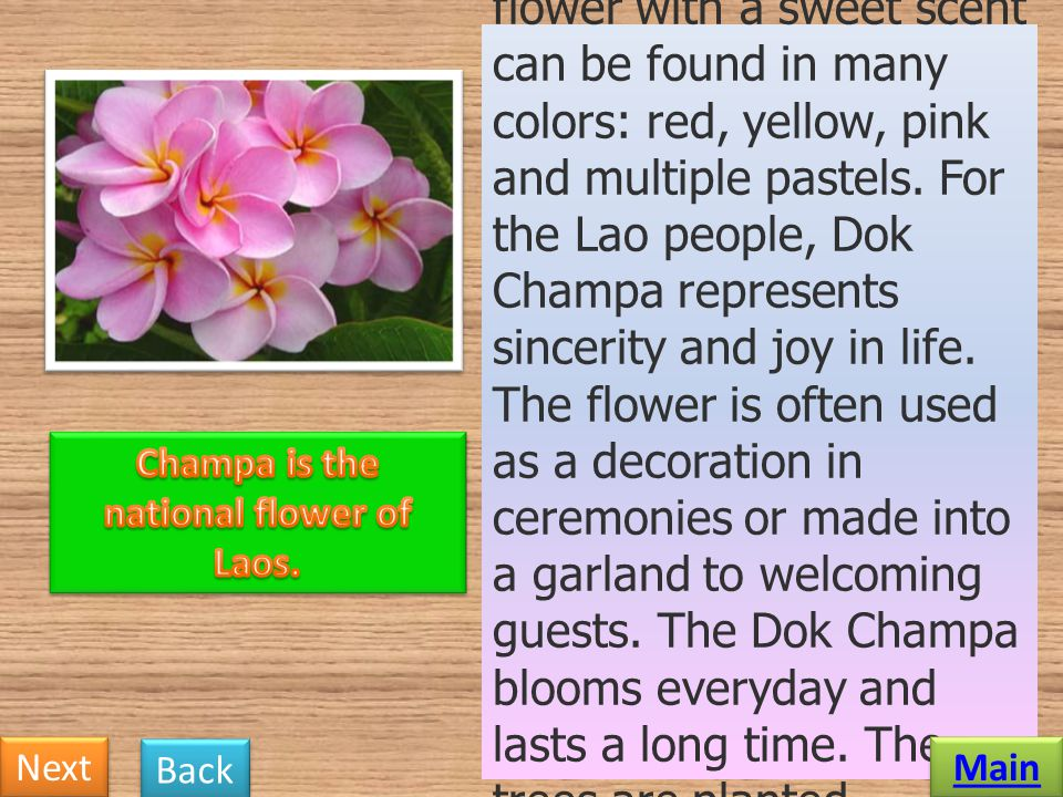Champa is the national flower of Laos.