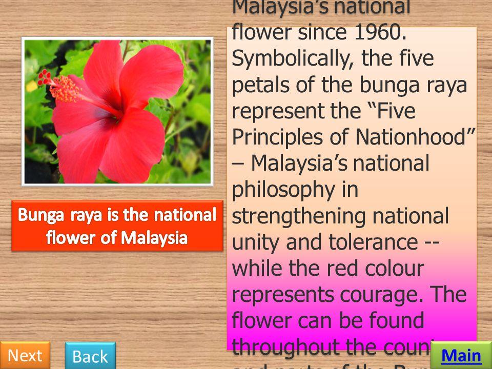 Bunga raya is the national flower of Malaysia