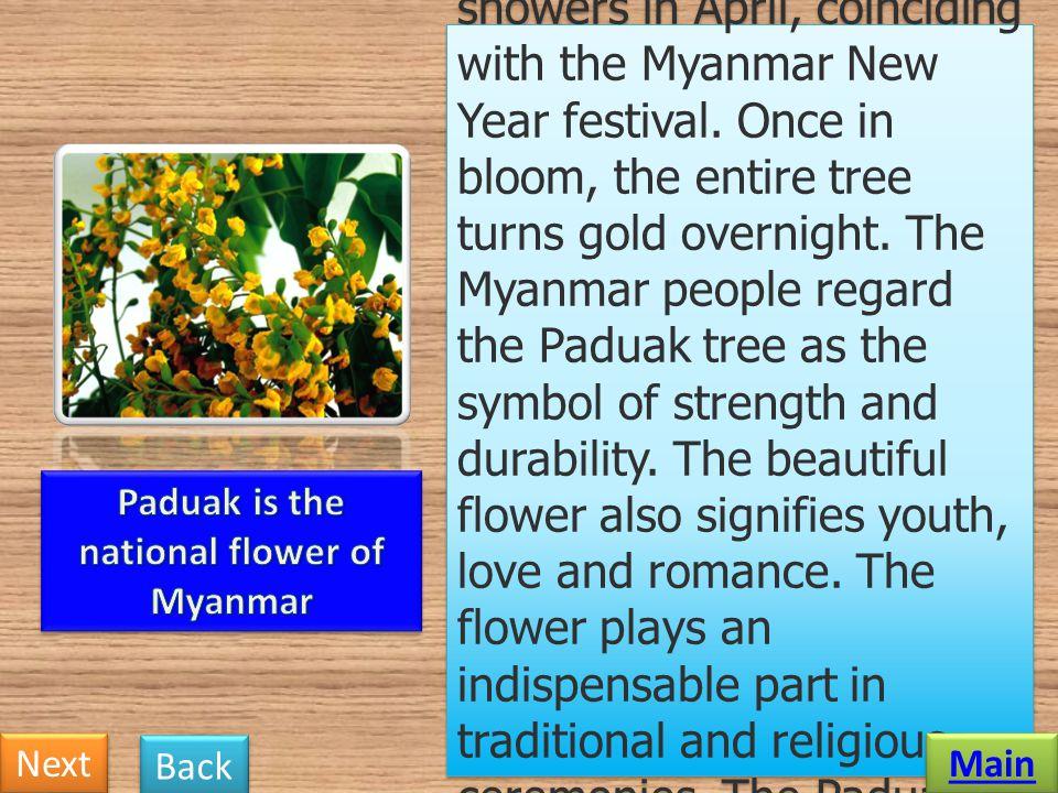 Paduak is the national flower of Myanmar