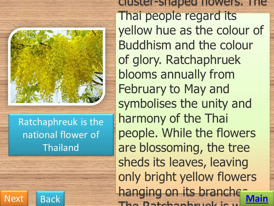 Ratchaphreuk is the national flower of Thailand