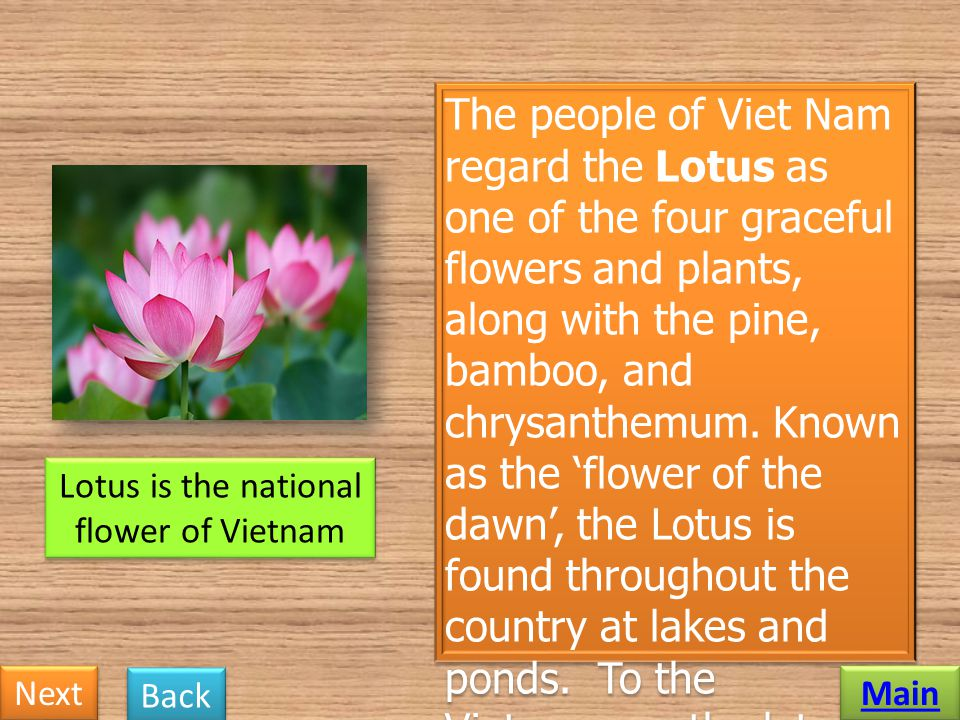 Lotus is the national flower of Vietnam