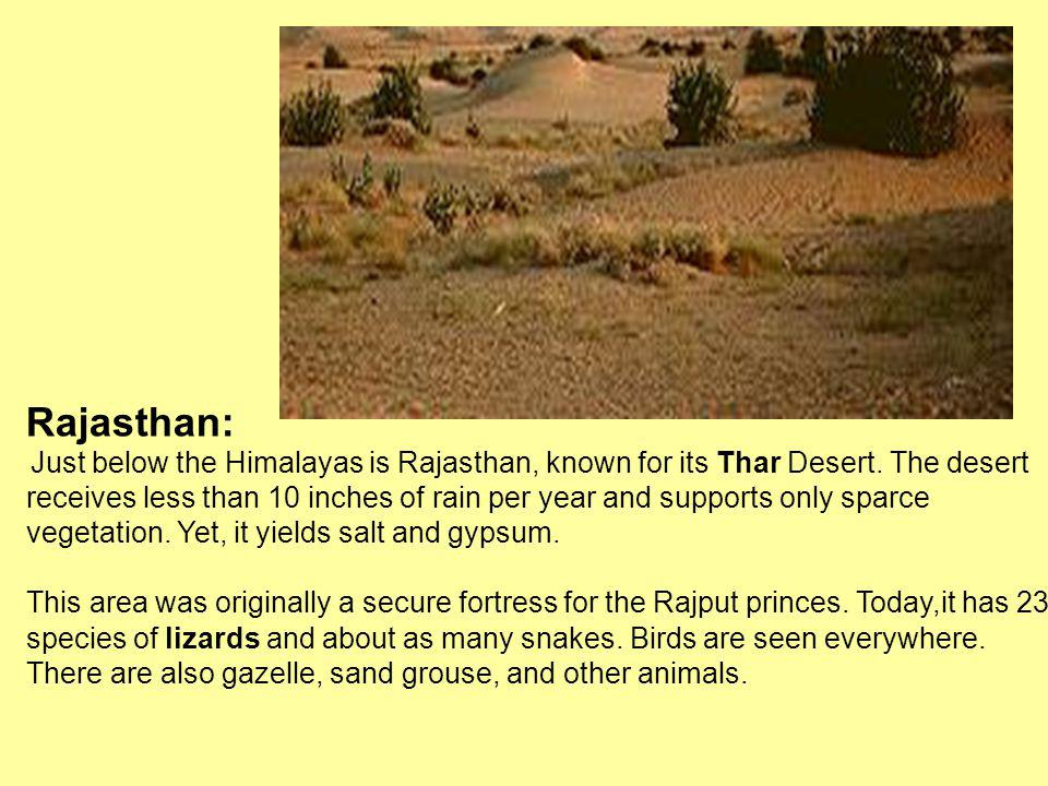 Rajasthan: Just below the Himalayas is Rajasthan, known for its Thar Desert. The desert.