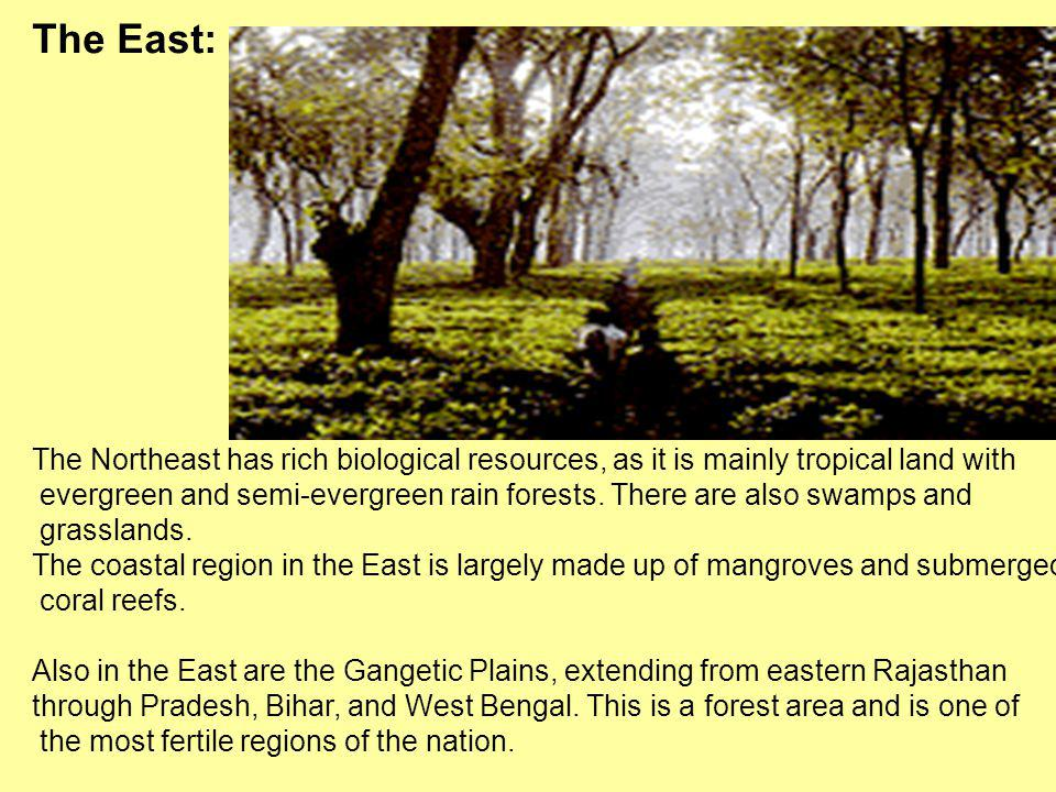 The East: The Northeast has rich biological resources, as it is mainly tropical land with.
