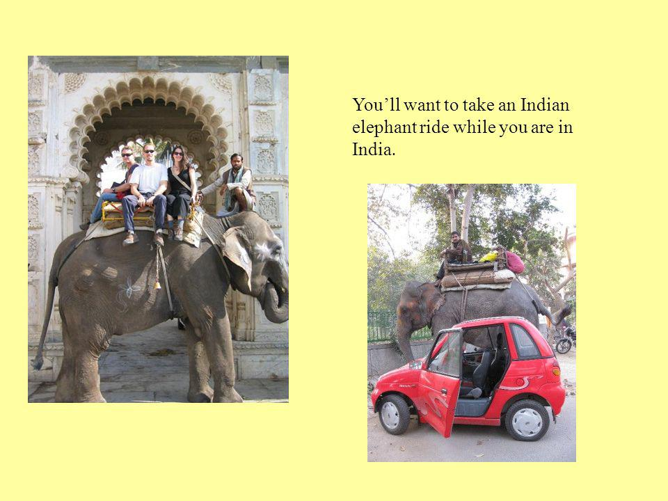 You'll want to take an Indian elephant ride while you are in India.