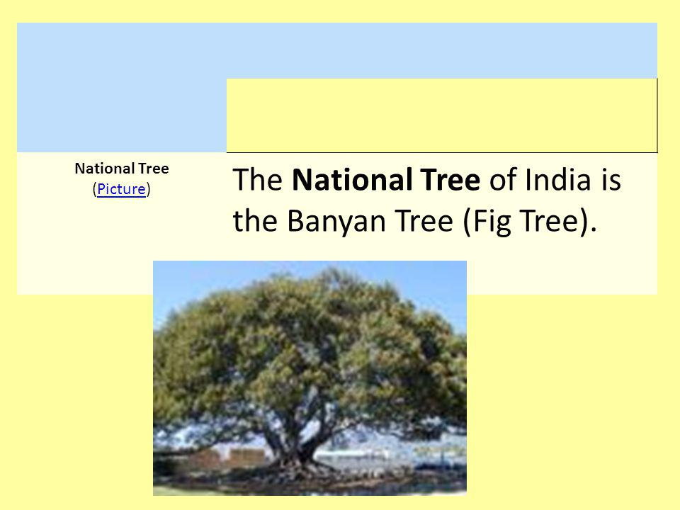 National Tree (Picture)