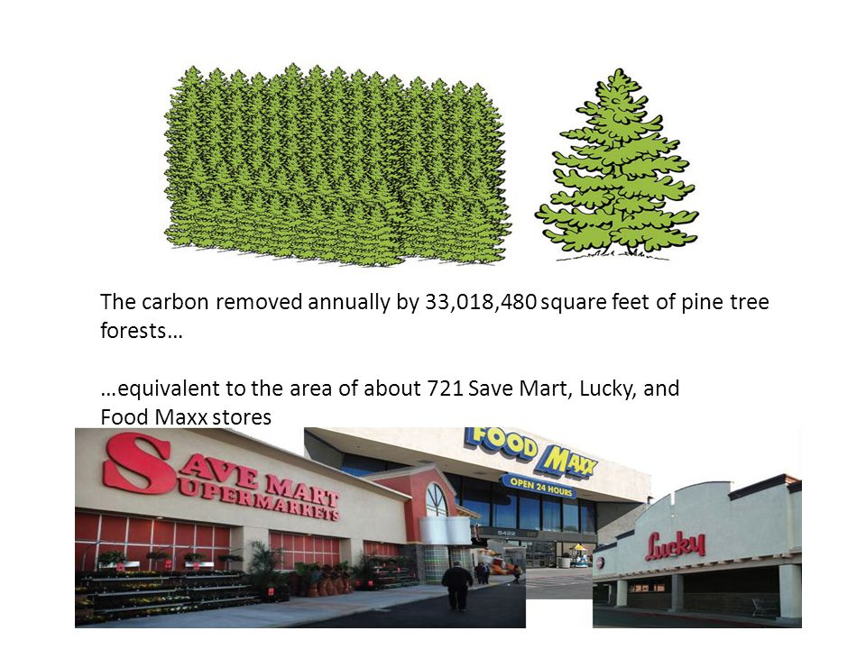 The carbon removed annually by 33,018,480 square feet of pine tree forests…