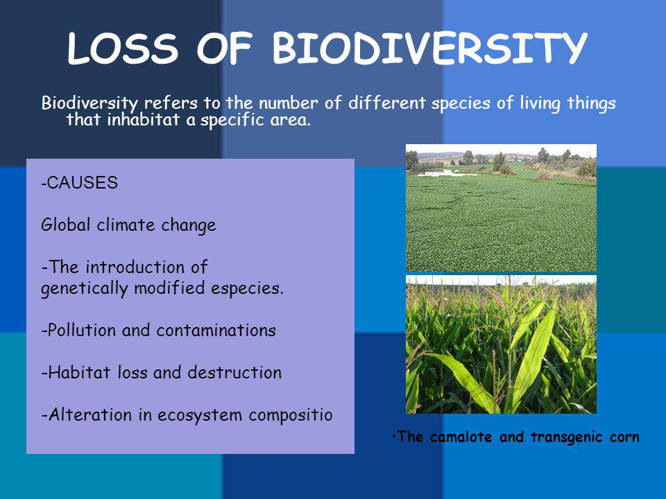 LOSS OF BIODIVERSITY Biodiversity refers to the number of different species of living things that inhabitat a specific area.