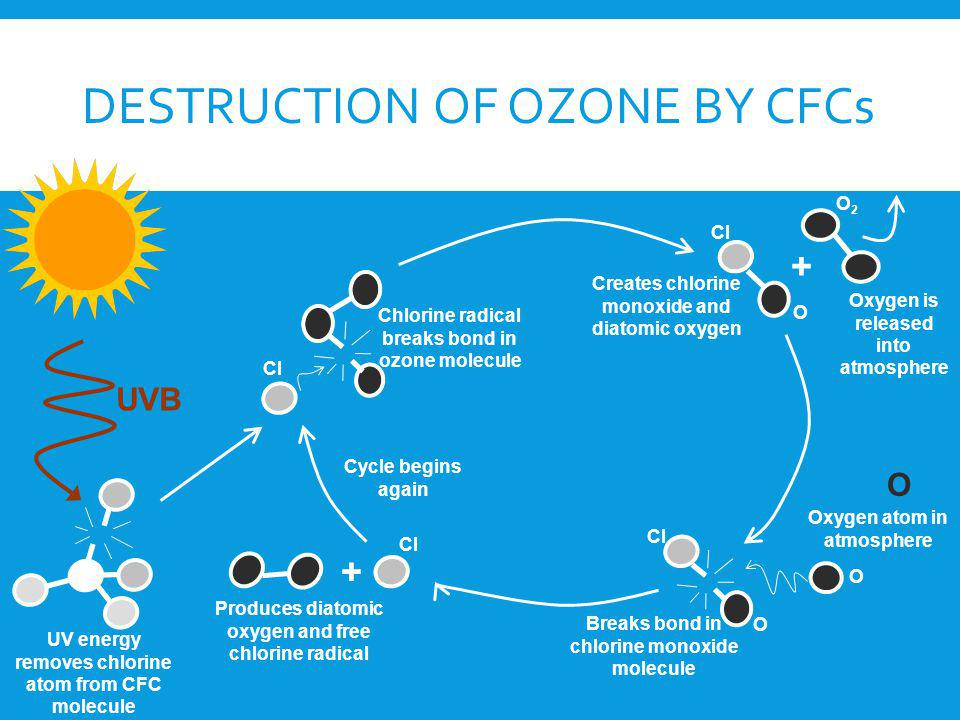 Destruction of Ozone by CFCs