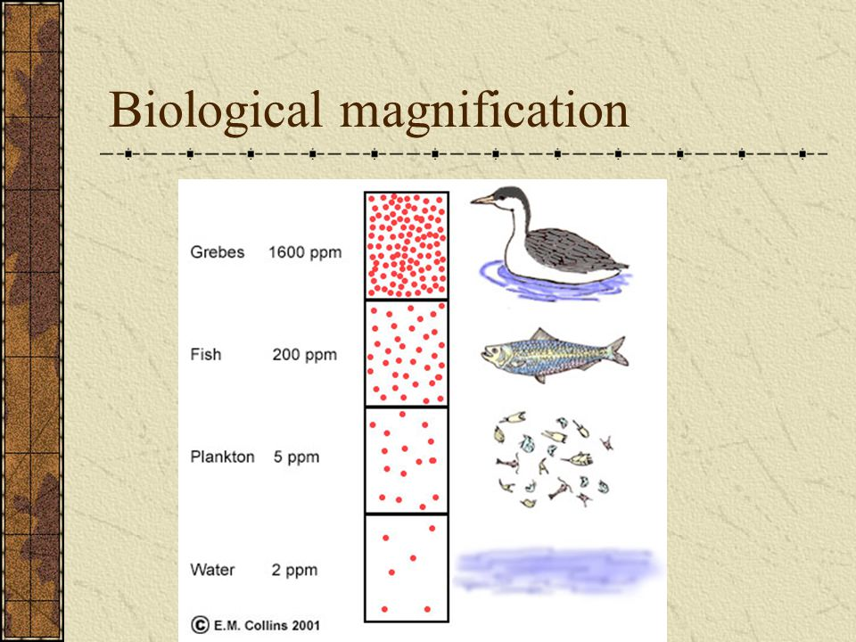 biological magnification essays Experiment 8 exercise 1 – species interactions: competition 16if biological magnification occurs  superior essay papers.