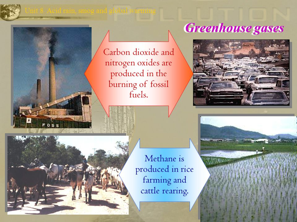 Methane is produced in rice farming and cattle rearing.