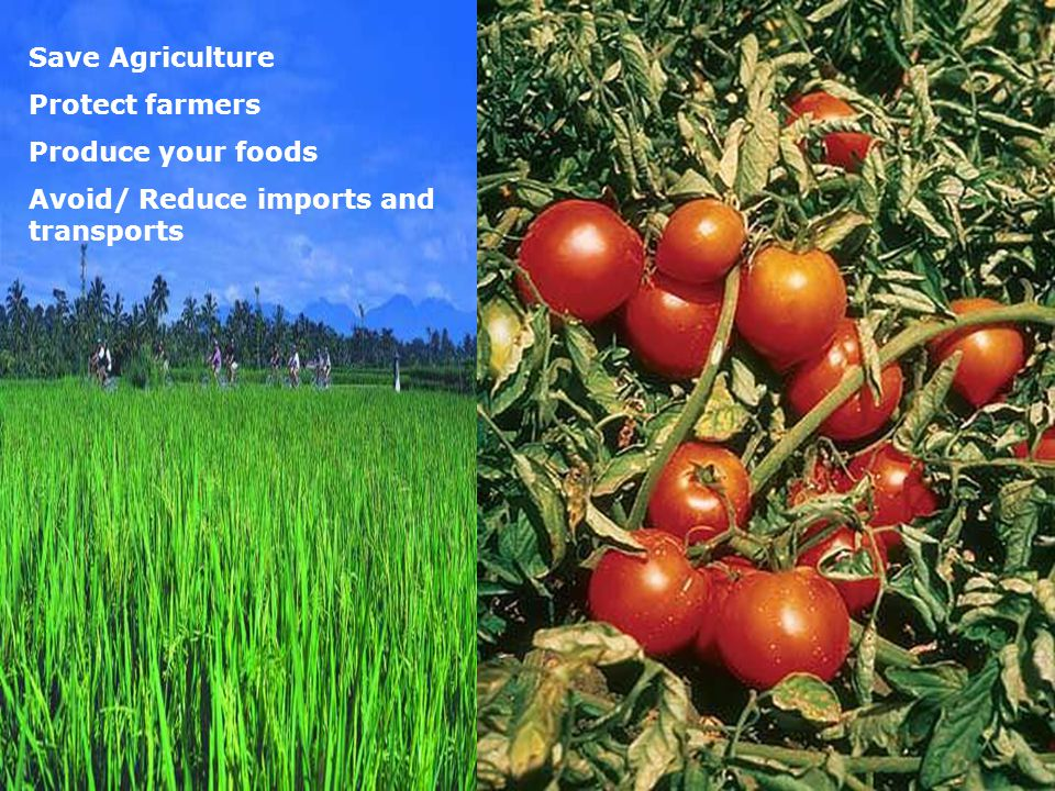 Save Agriculture Protect farmers Produce your foods Avoid/ Reduce imports and transports