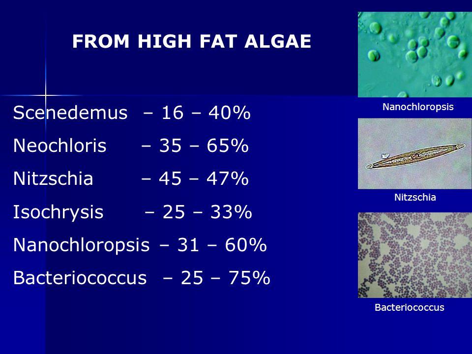 FROM HIGH FAT ALGAE Scenedemus – 16 – 40% Neochloris – 35 – 65%