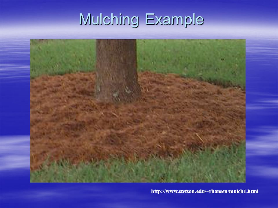 Mulching Example http://www.stetson.edu/~rhansen/mulch1.html