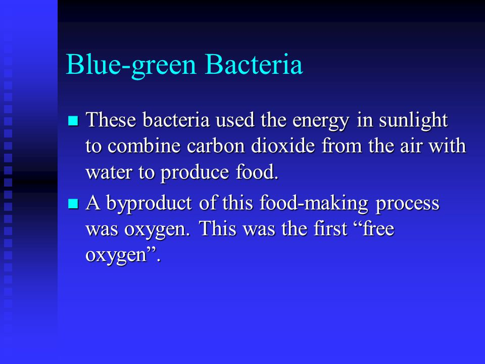 Blue-green Bacteria These bacteria used the energy in sunlight to combine carbon dioxide from the air with water to produce food.