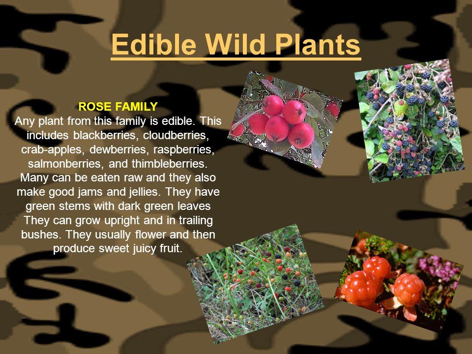 Edible Wild Plants ROSE FAMILY