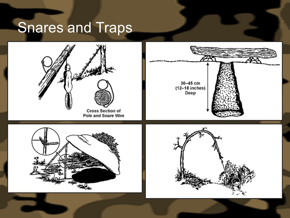 Snares and Traps