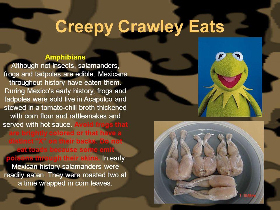Creepy Crawley Eats Amphibians