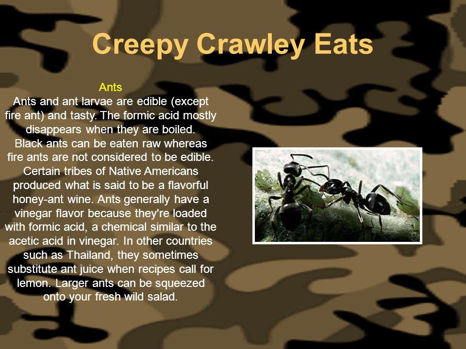 Creepy Crawley Eats Ants