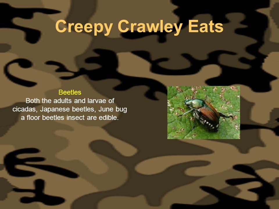 Creepy Crawley Eats Beetles