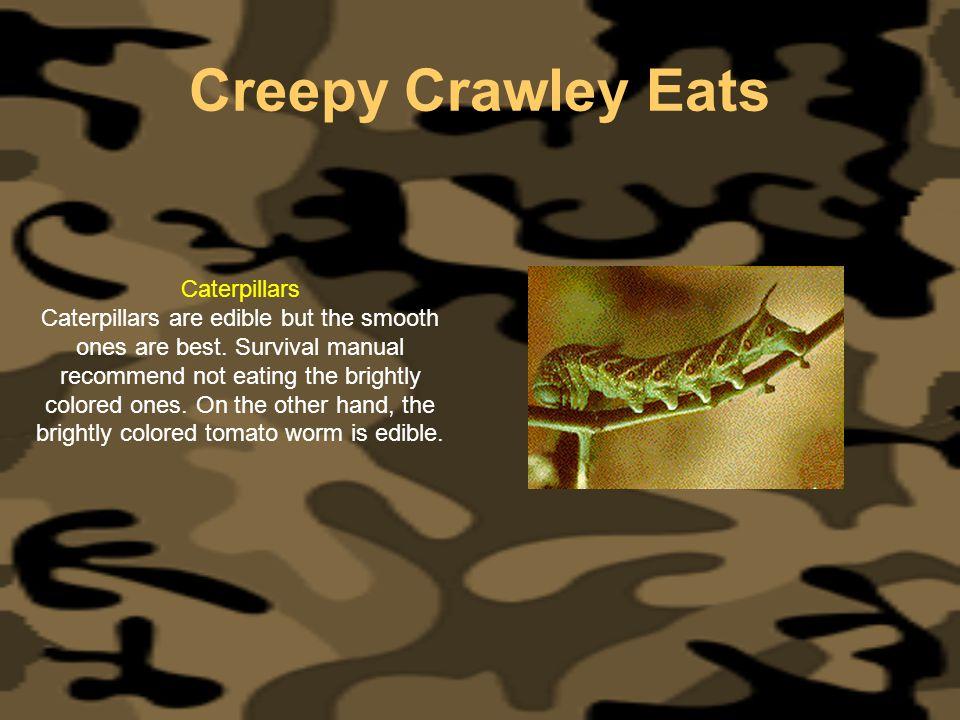 Creepy Crawley Eats Caterpillars