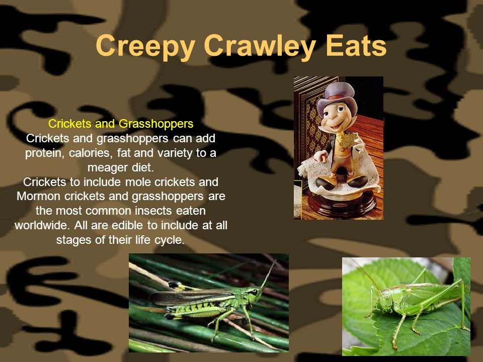 Crickets and Grasshoppers
