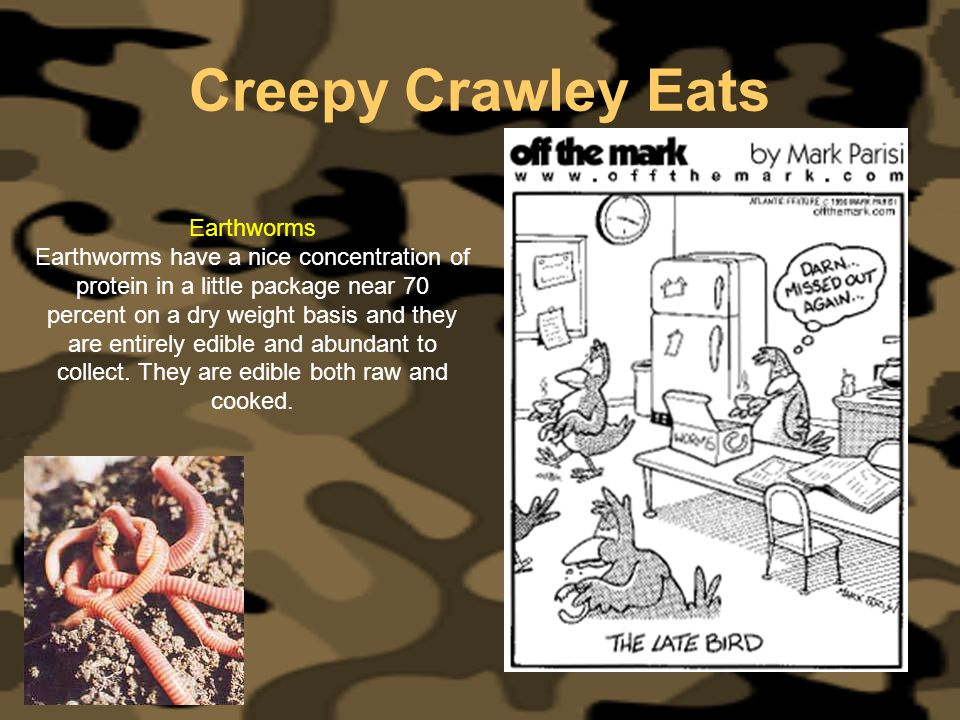 Creepy Crawley Eats Earthworms