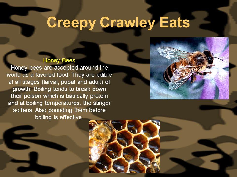 Creepy Crawley Eats Honey Bees