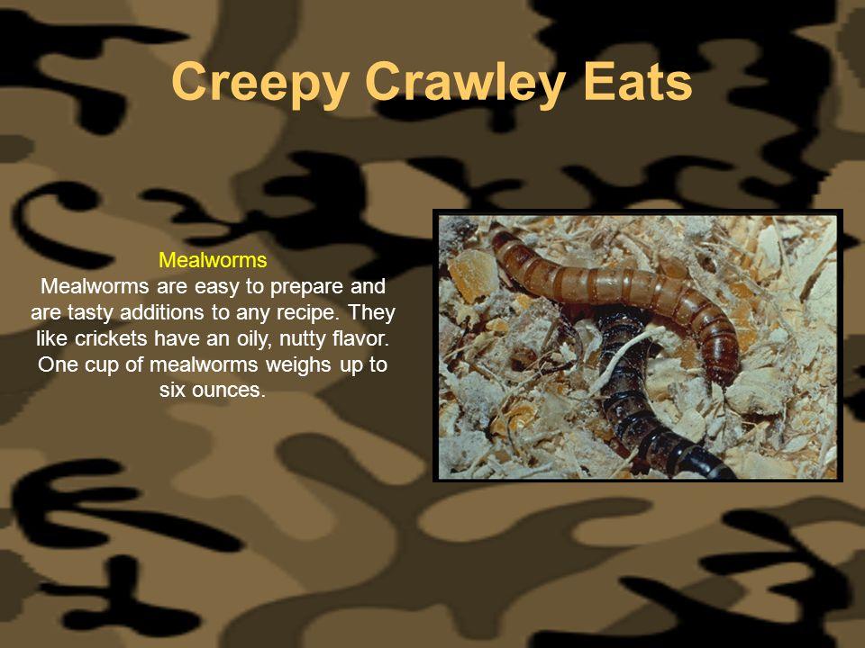 Creepy Crawley Eats Mealworms