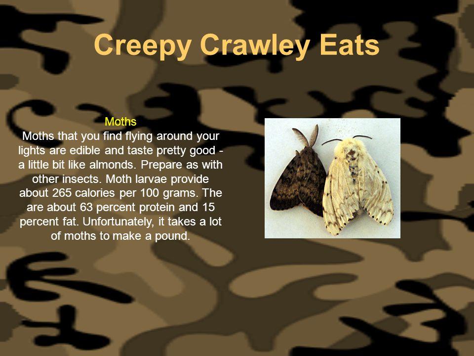 Creepy Crawley Eats Moths