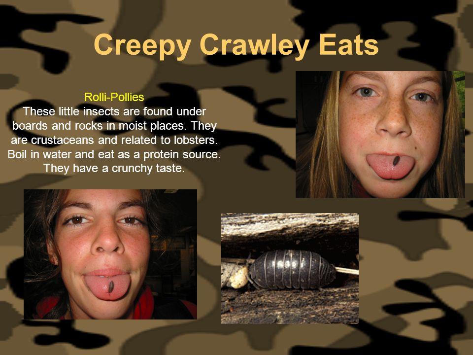Creepy Crawley Eats Rolli-Pollies