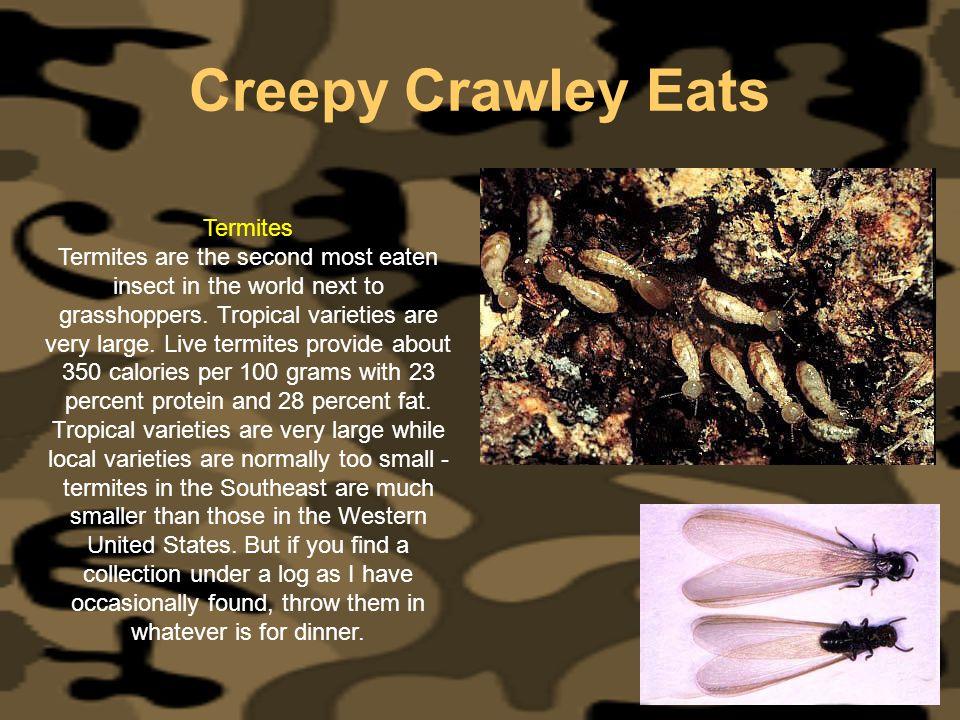 Creepy Crawley Eats Termites