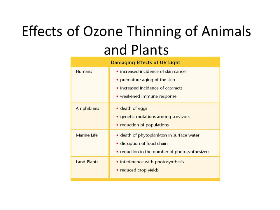 Effects of Ozone Thinning of Animals and Plants