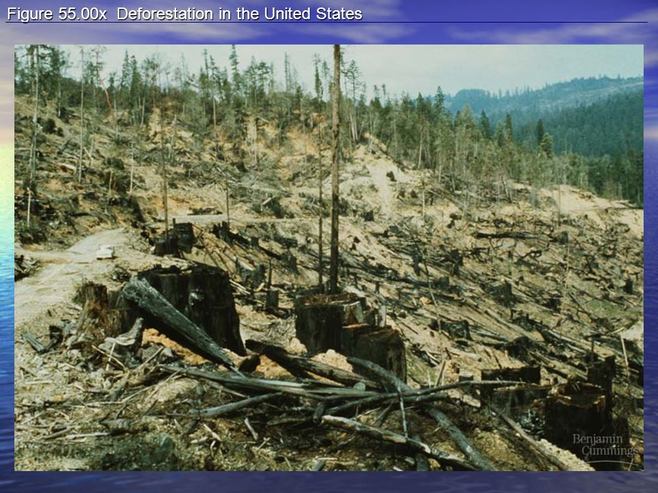 Figure 55.00x Deforestation in the United States