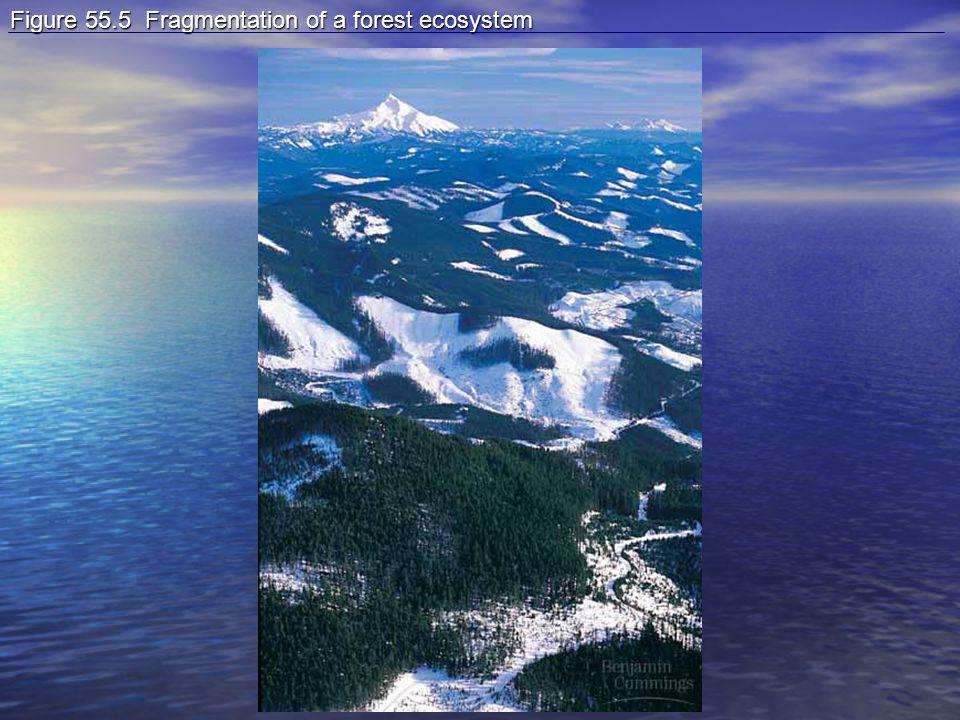 Figure 55.5 Fragmentation of a forest ecosystem