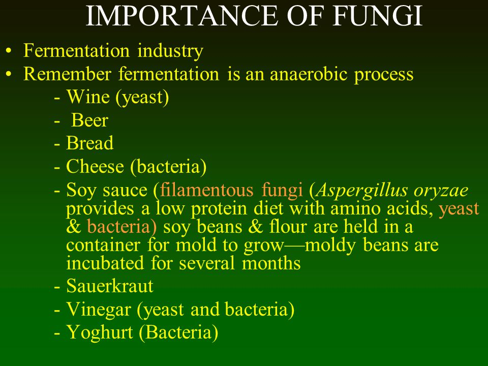 IMPORTANCE OF FUNGI Fermentation industry