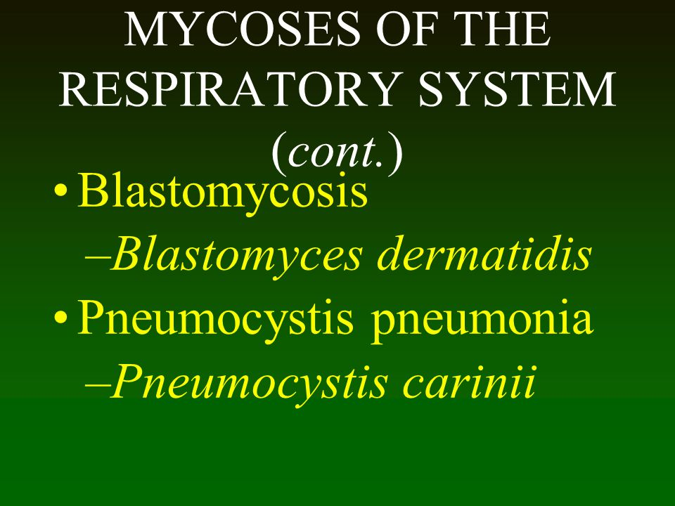 MYCOSES OF THE RESPIRATORY SYSTEM (cont.)