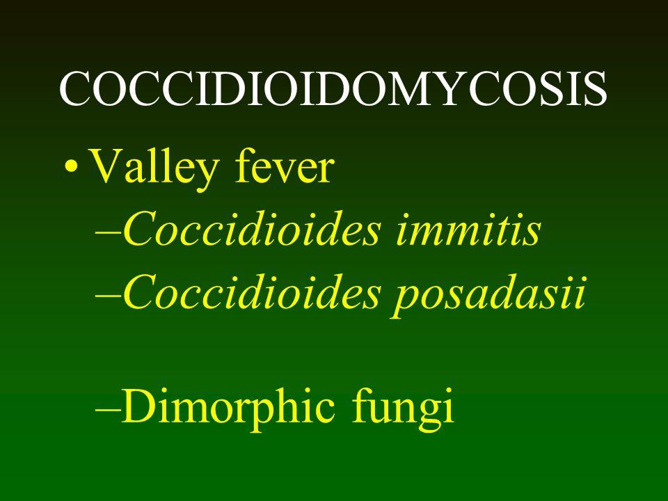 Coccidioides posadasii Dimorphic fungi