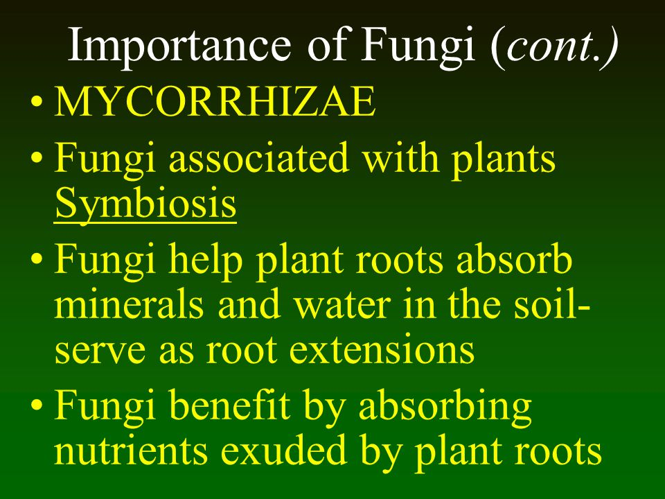 Importance of Fungi (cont.)