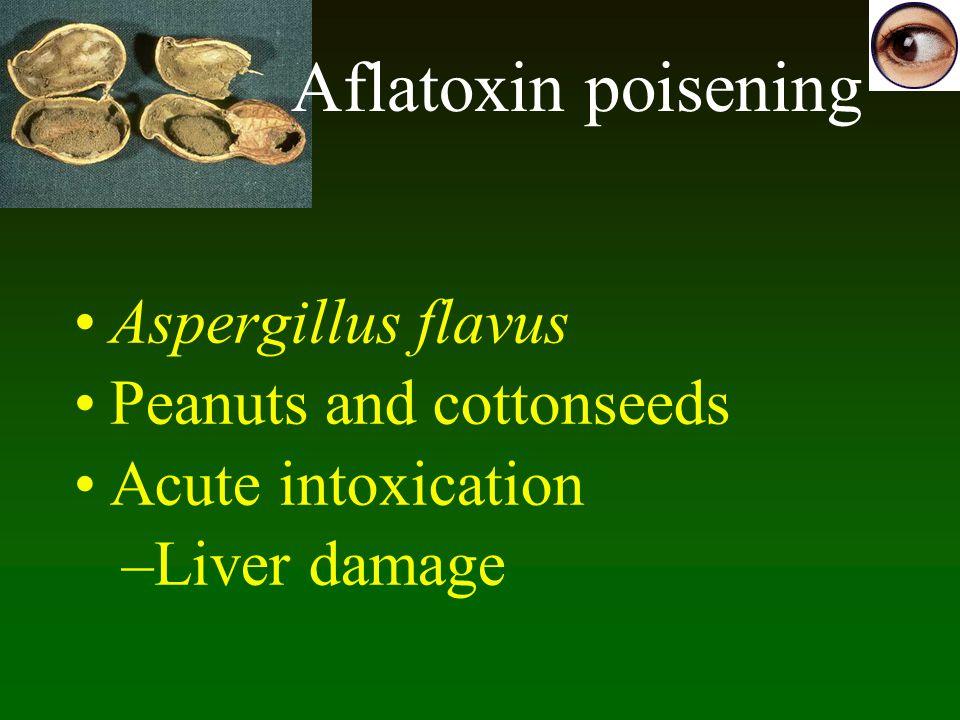 Aflatoxin poisening Aspergillus flavus Peanuts and cottonseeds