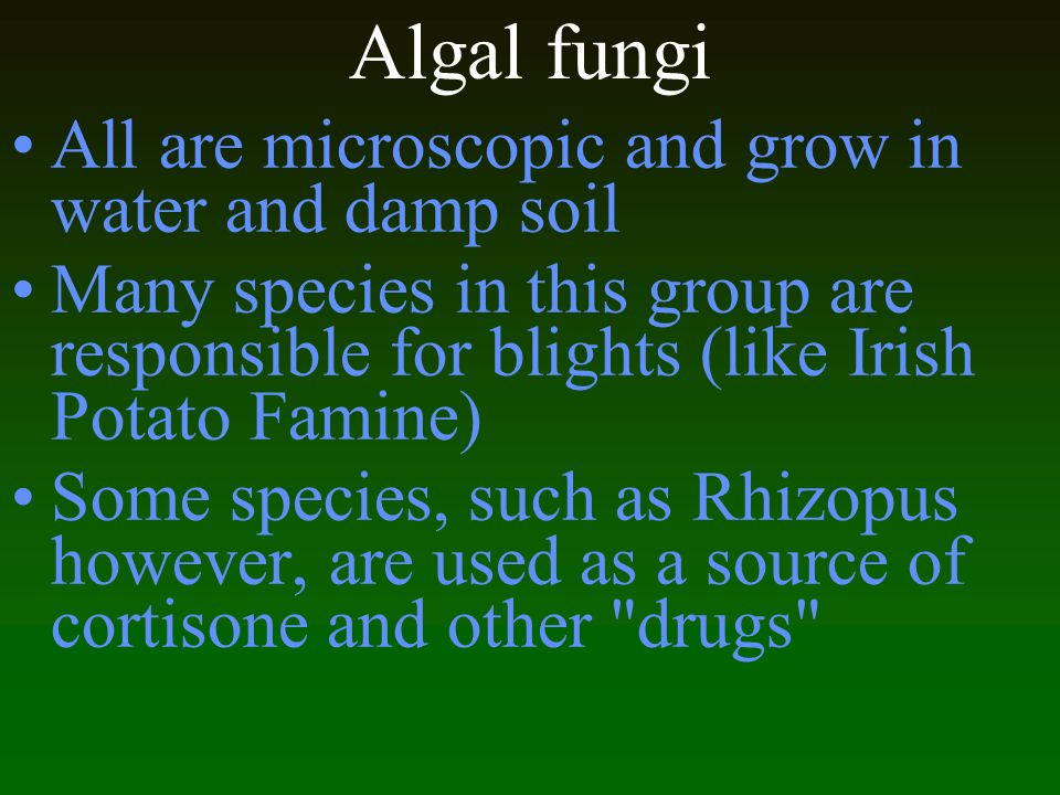 Algal fungi All are microscopic and grow in water and damp soil