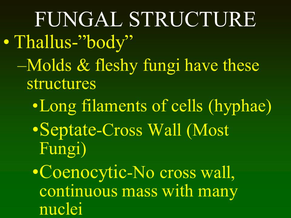 FUNGAL STRUCTURE Thallus- body Septate-Cross Wall (Most Fungi)