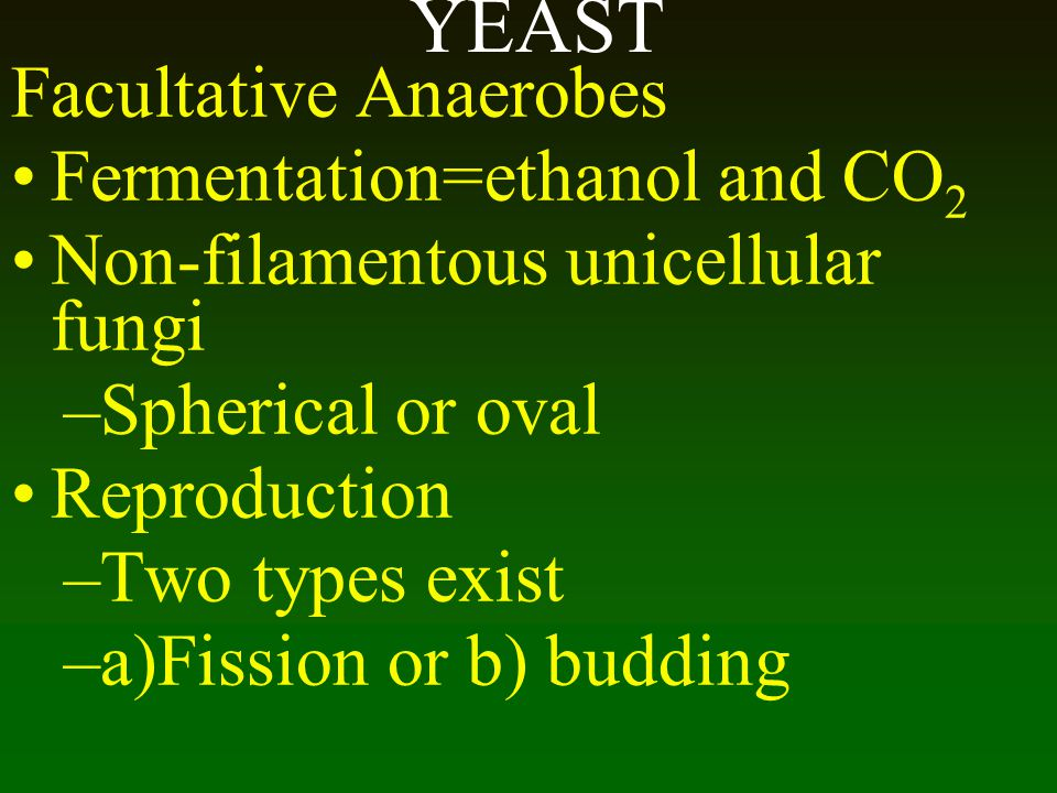 YEAST Facultative Anaerobes Fermentation=ethanol and CO2