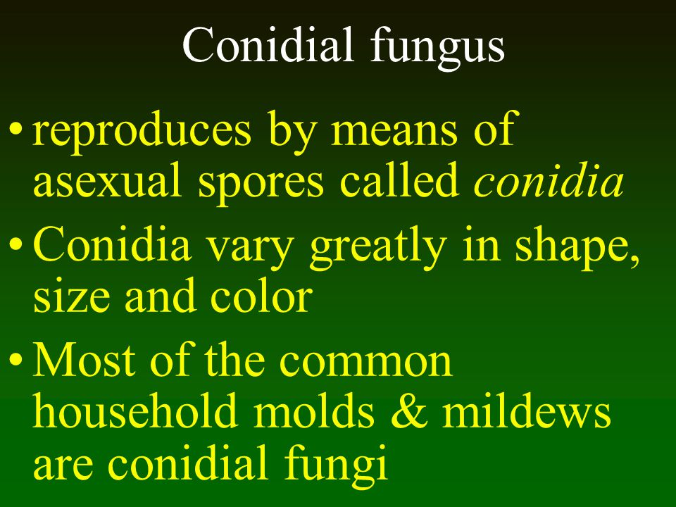 Conidial fungus reproduces by means of asexual spores called conidia. Conidia vary greatly in shape, size and color.