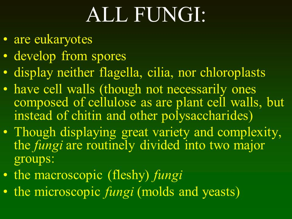 ALL FUNGI: are eukaryotes develop from spores